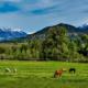 Best Family Dude Ranch Vacations Colorado