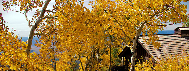 Where to See Colorado Fall Colors