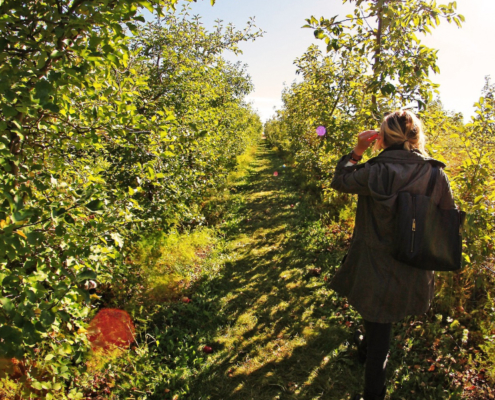 apple picking in colorado
