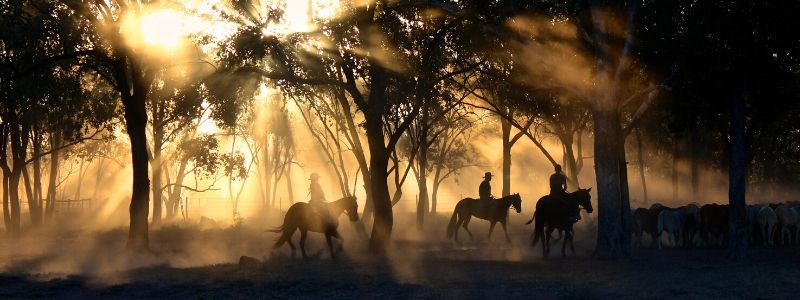 australia largest ranches